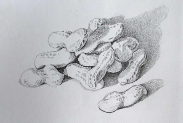 Sketch of peanuts